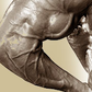 Glutamine & Leucine for Muscle Growth