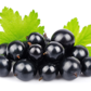 Latest Research - Weight Loss Superfood Blackcurrant